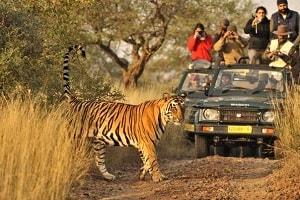 Ranthambore Safari Bookings