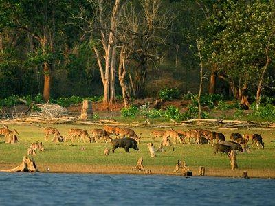 bharatpur sanctuary image