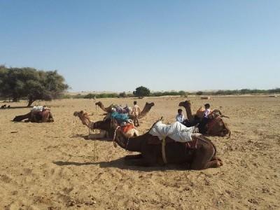 camel safari at khuri sand dune rj